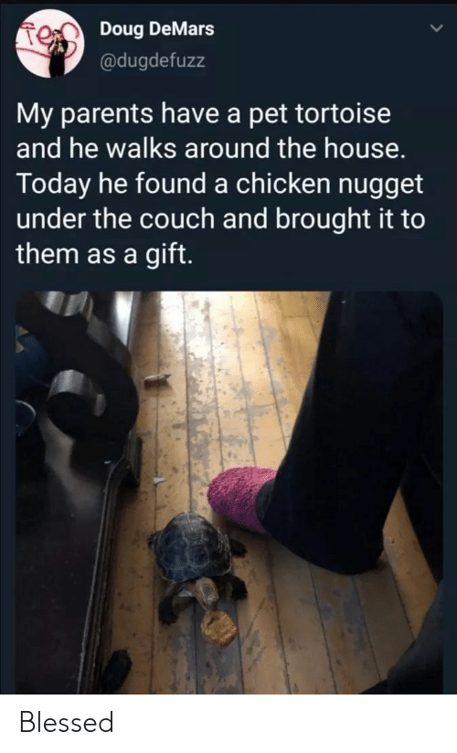 Blessed, Doug, and Parents: Doug DeMars  @dugdefuzz  My parents have a pet tortoise  and he walks around the house.  Today he found a chicken nugget  under the couch and brought it to  them as a gift. Blessed