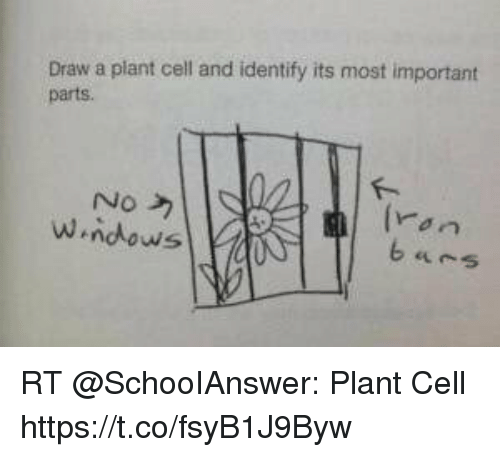 Draw a plant cell and identify its most important parts no rt memes and cell draw a plant cell and identify its most important ccuart