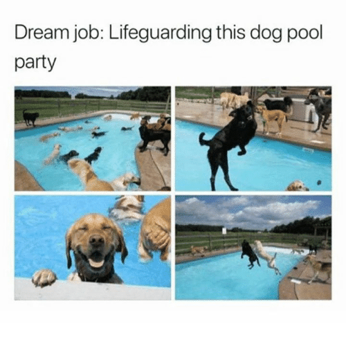 Party, Pool, and Dog: Dream job: Lifeguarding this dog pool  party