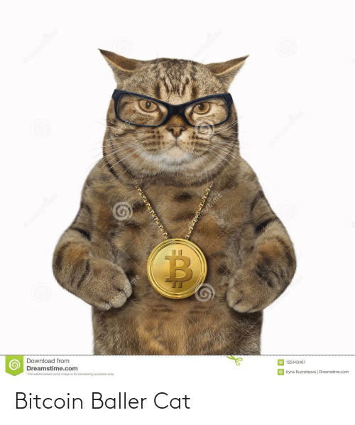 Image, Bitcoin, and Cat: dreamstime  reamscime  dreamstime  dmstime  dreamstime  Download from  Dreamstime.com  This watermarked comp image is for previewing purposes only.  ID 122443461  © Iryna Kuznetsova   Dreamstime.com  dreamstime  dreamstime  dreamstime Bitcoin Baller Cat