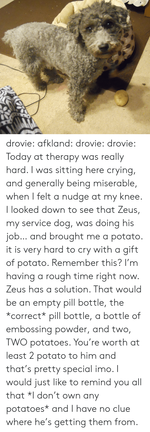 Crying, Target, and Tumblr: drovie: afkland:  drovie:  drovie:  Today at therapy was really hard. I was sitting here crying, and generally being miserable, when I felt a nudge at my knee. I looked down to see that Zeus, my service dog, was doing his job… and brought me a potato. it is very hard to cry with a gift of potato.   Remember this? I'm having a rough time right now. Zeus has a solution.  That would be an empty pill bottle, the *correct* pill bottle, a bottle of embossing powder, and two, TWO potatoes.   You're worth at least 2 potato to him and that's pretty special imo.   I would just like to remind you all that *I don't own any potatoes* and I have no clue where he's getting them from.