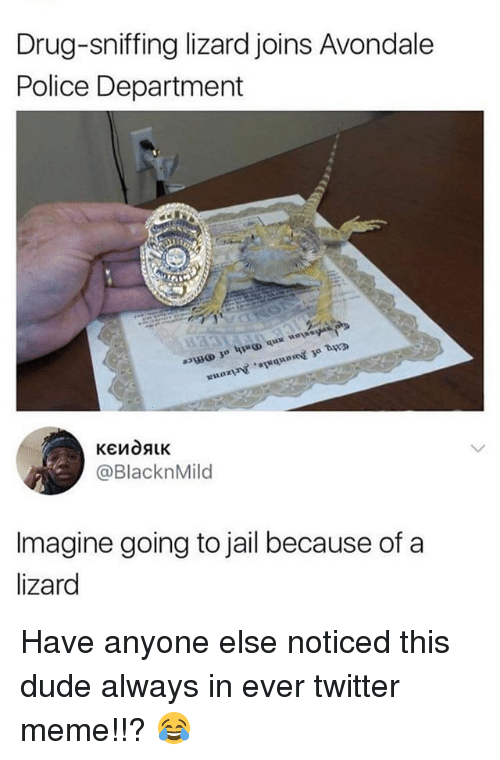 Dude, Jail, and Meme: Drug-sniffing lizard joins Avondale  Police Department  @BlacknMild  Imagine going to jail because of a  lizard Have anyone else noticed this dude always in ever twitter meme!!? 😂