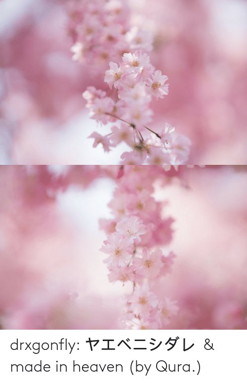 Heaven, Target, and Tumblr: drxgonfly:    ヤエベニシダレ & made in heaven(by Qura.)