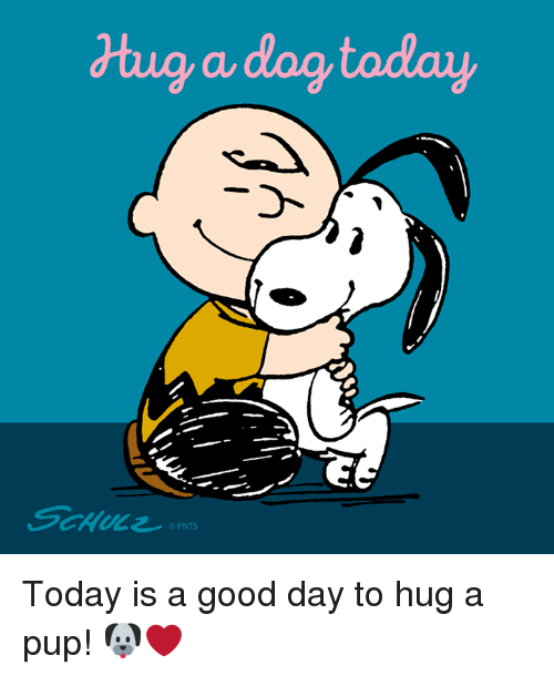 Memes, Good, and Today: dtug a dog today  OPNTS Today is a good day to hug a pup! 🐶❤️
