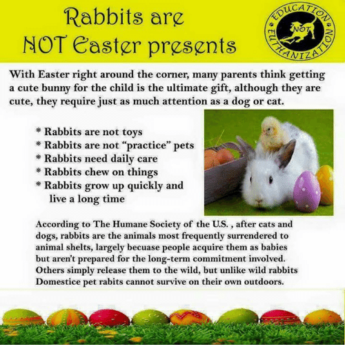 Duca rabbits are ot not easter presents with easter right around animals cats and cute duca rabbits are ot not easter presents with easter negle Image collections