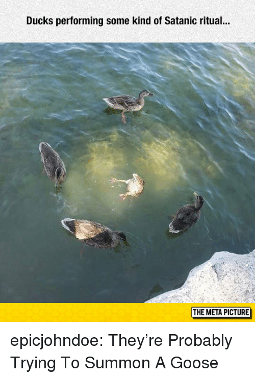 Tumblr, Blog, and Ducks: Ducks performing some kind of Satanic ritual..  THE META PICTURE epicjohndoe:  They're Probably Trying To Summon A Goose