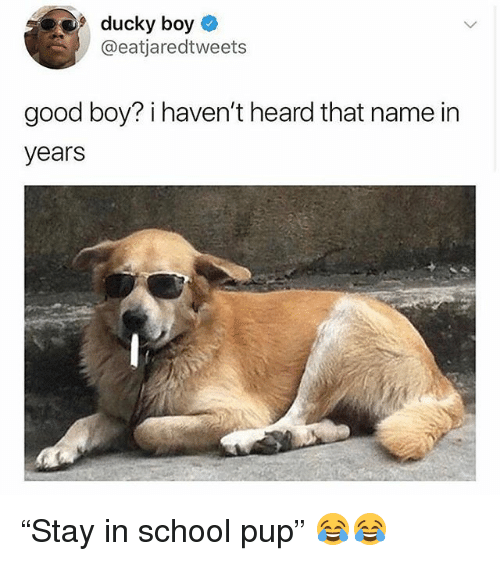 """Funny, School, and Good: ducky boy  @eatjaredtweets  good boy? i haven't heard that name in  years """"Stay in school pup"""" 😂😂"""