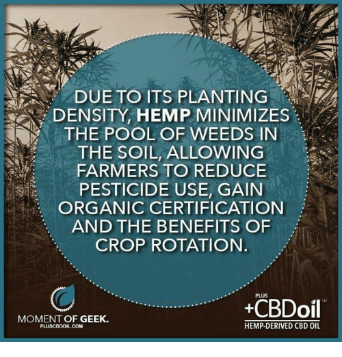 due to its planting density hemp minimizes the pool of weeds in