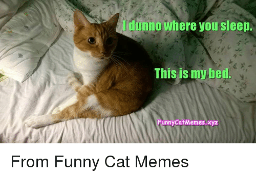 Memes And Funny Cats Dunno Where You Sleep This Is My