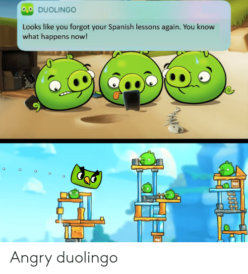 Image result for duolingo looks like you forgot gif""