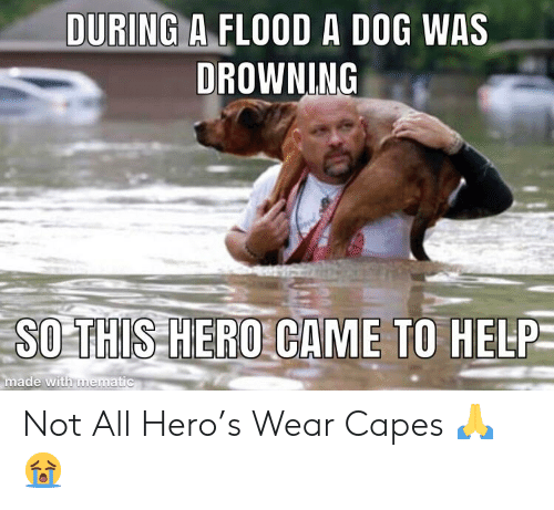 Help, Hero, and Dog: DURING A FLOOD A DOG WAS  DROWNING  SO THIS HERO CAME TO HELP  made with imer  ematic Not All Hero's Wear Capes 🙏😭
