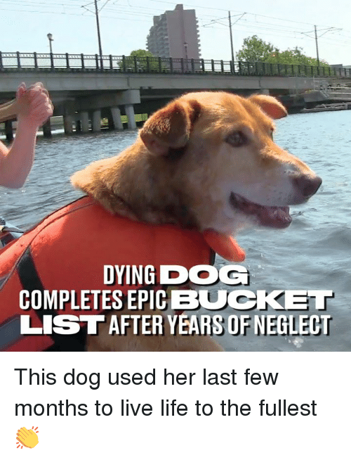 Dank, Life, and Live: DYING DOG  COMPLETES EPIC BUCKET  LISTAFTER YEARS OF NEGLECT This dog used her last few months to live life to the fullest 👏
