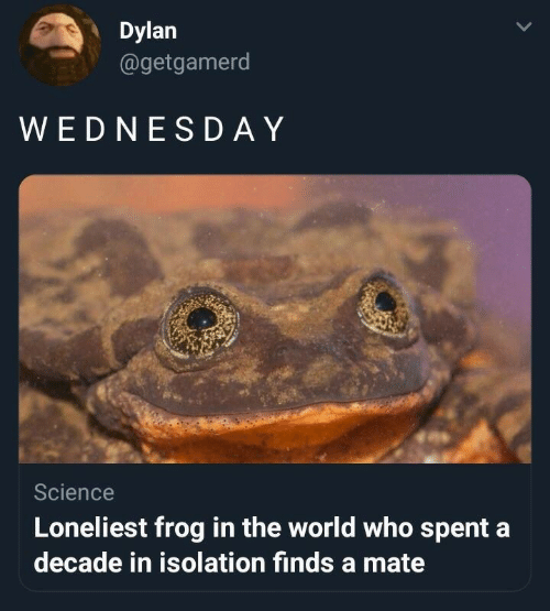 Science, World, and Who: Dylan  agetgamerd  WEDNESD AY  Science  Loneliest frog in the world who spent a  decade in isolation finds a mate