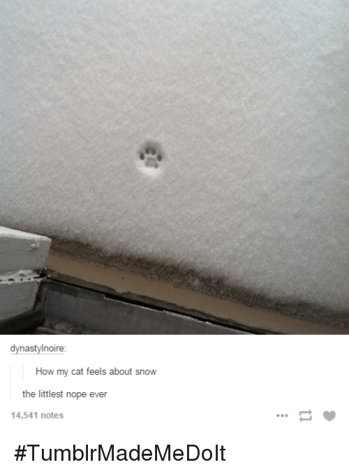 Dynastylnoire How My Cat Feels About Snow The Littlest Nope Ever