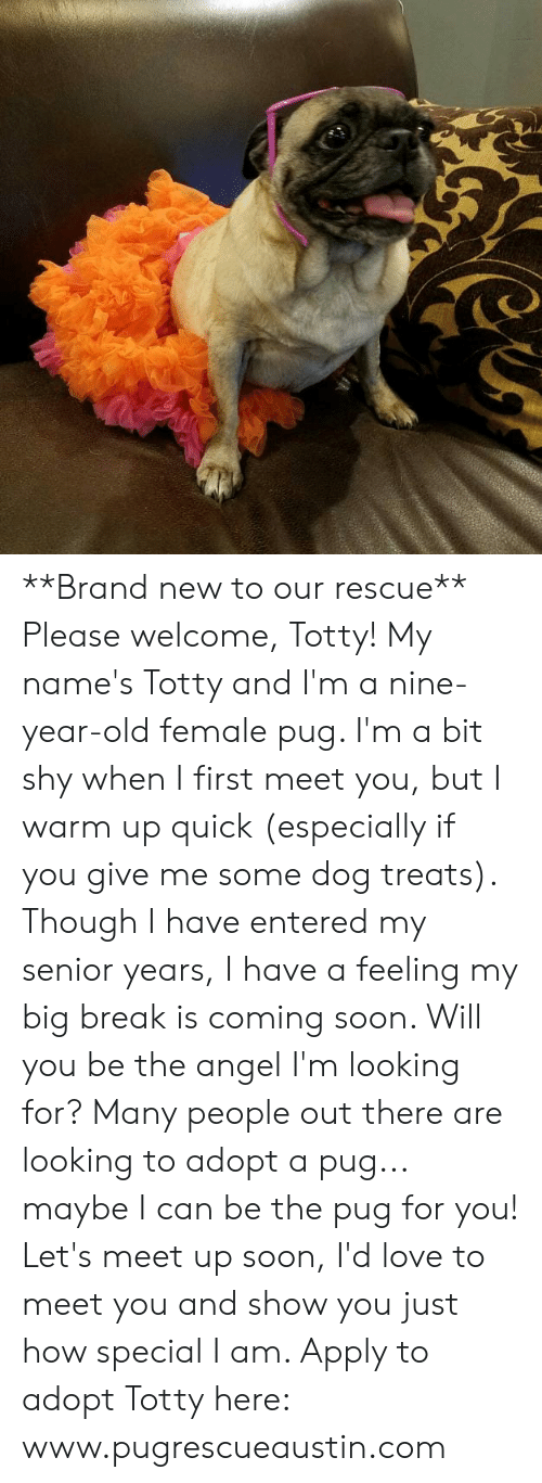 Love, Memes, and Soon...: e **Brand new to our rescue**  Please welcome, Totty!  My name's Totty and I'm a nine-year-old female pug.  I'm a bit shy when I first meet you, but I warm up quick (especially if you give me some dog treats).    Though I have entered my senior years, I have a feeling my big break is coming soon.  Will you be the angel I'm looking for?   Many people out there are looking to adopt a pug... maybe I can be the pug for you! Let's meet up soon, I'd love to meet you and show you just how special I am.    Apply to adopt Totty here: www.pugrescueaustin.com