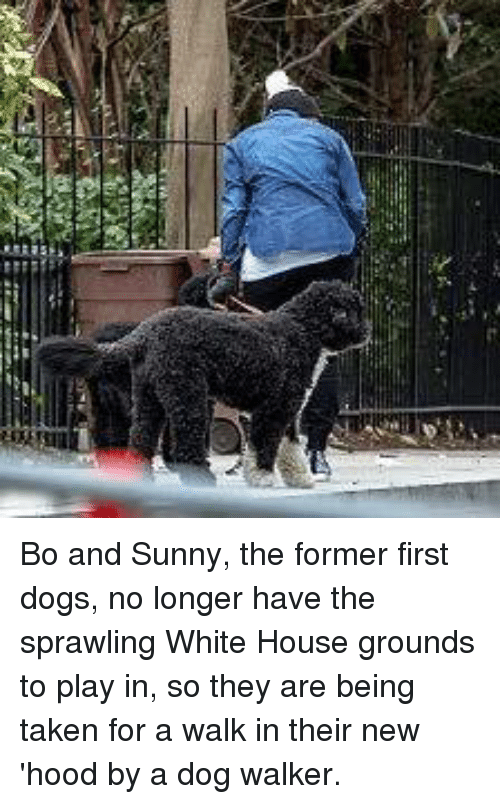 Een Bo and Sunny the Former First Dogs No Longer Have the