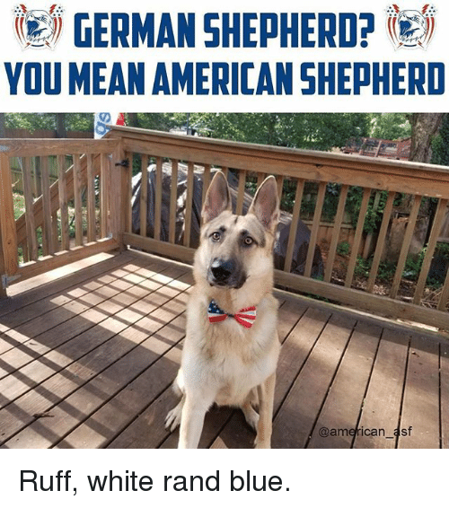 Memes, Blue, and German Shepherd: (e) GERMAN SHEPHERD?  YOU MEANAMERICAN SHEPHERID Ruff, white rand blue.