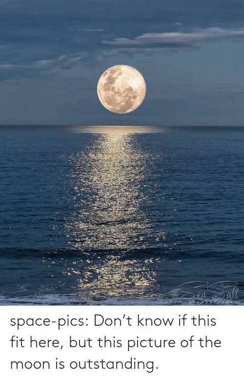 Tumblr, Blog, and Moon: ea space-pics:  Don't know if this fit here, but this picture of the moon is outstanding.