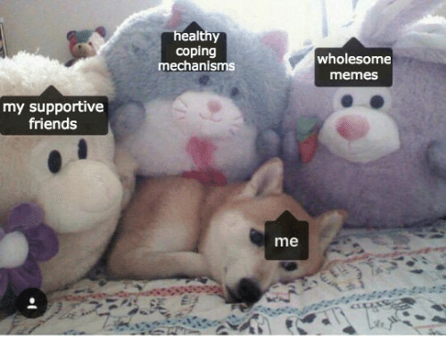 Friends, Memes, and Wholesome: ealthy  coping  mechanisms  wholesome  memes  my supportive  friends  me
