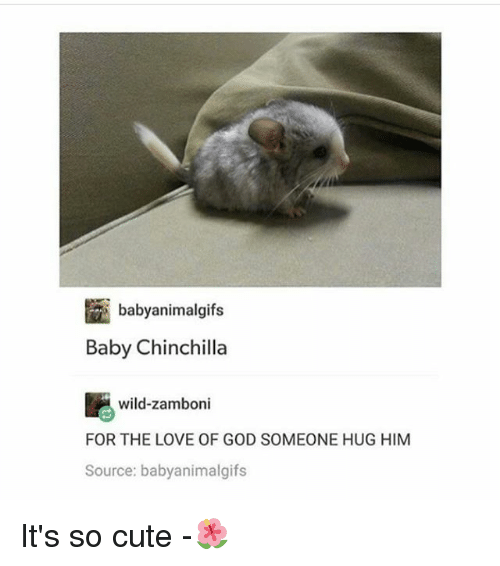 Cute, God, and Love: Ean b  Baby Chinchilla  abyanimalqufs  wild-zamboni  FOR THE LOVE OF GOD SOMEONE HUG HIM  Source: babyanimalgifs It's so cute -🌺