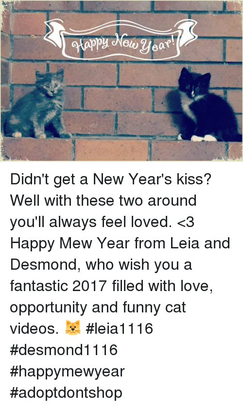 Funny New Years Kiss Meme : Best memes about funny cats videos