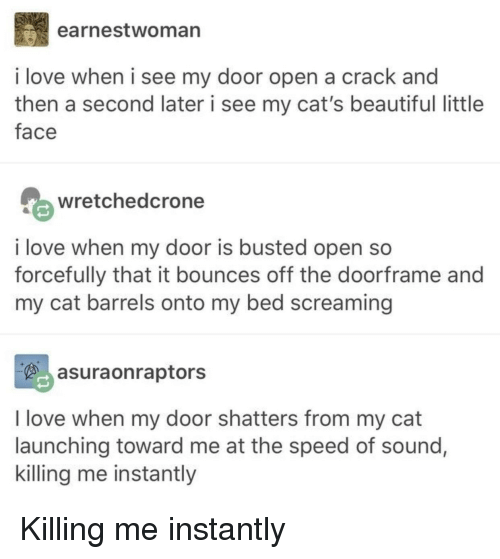 Beautiful, Cats, and Love: earnestwoman  i love when i see my door open a crack and  then a second later i see my cat's beautiful little  face  wretchedcrone  i love when my door is busted open so  forcefully that it bounces off the doorframe and  my cat barrels onto my bed screaming  asuraonraptors  I love when my door shatters from my cat  launching toward me at the speed of sound,  killing me instantly Killing me instantly