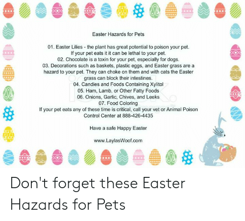 Cats, Dogs, and Easter: Easter Hazards for Pets  01. Easter Lilies the plant has great potential to poison your pet.  If your pet eats it it can be lethal to your pet.  02. Chocolate is a toxin for your pet, especially for dogs  03. Decorations such as baskets, plastic eggs, and Easter grass are a  hazard to your pet. They can choke on them and with cats the Easter  grass can block their intestines  04. Candies and Foods Containing Xylitol  05. Ham, Lamb, or Other Fatty Foods  06. Onions, Garlic, Chives, and Leeks  07. Food Coloring  If your pet eats any of these time is critical, call your vet or Animal Poison  Control Center at 888-426-4435  Have a safe Happy Easter  www.LaylasWoof.com Don't forget these Easter Hazards for Pets
