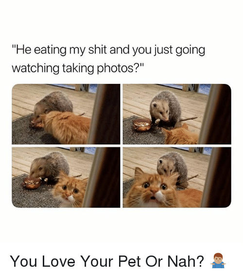 """Love, Shit, and Dank Memes: eating my shit and you just going  watching taking photos?"""" You Love Your Pet Or Nah? 🤷🏽♂️"""