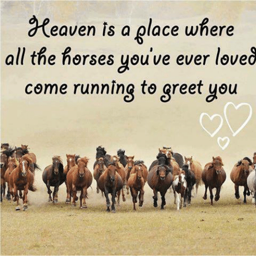Eaven is a place where all the horses youve ever leve come running horses memes and run eaven is a place where all the horses you m4hsunfo