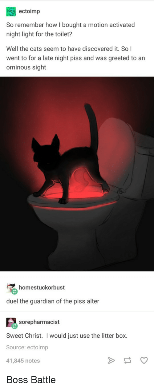 Cats, Guardian, and The Guardian: ectoimp  So remember how I bought a motion activated  night light for the toilet?  Well the cats seem to have discovered it. So I  went to for a late night piss and was greeted to an  ominous sight  homestuckorbust  duel the guardian of the piss alter  sorepharmacist  Sweet Christ. I would just use the litter box.  Source: ectoimp  41,845 notes Boss Battle