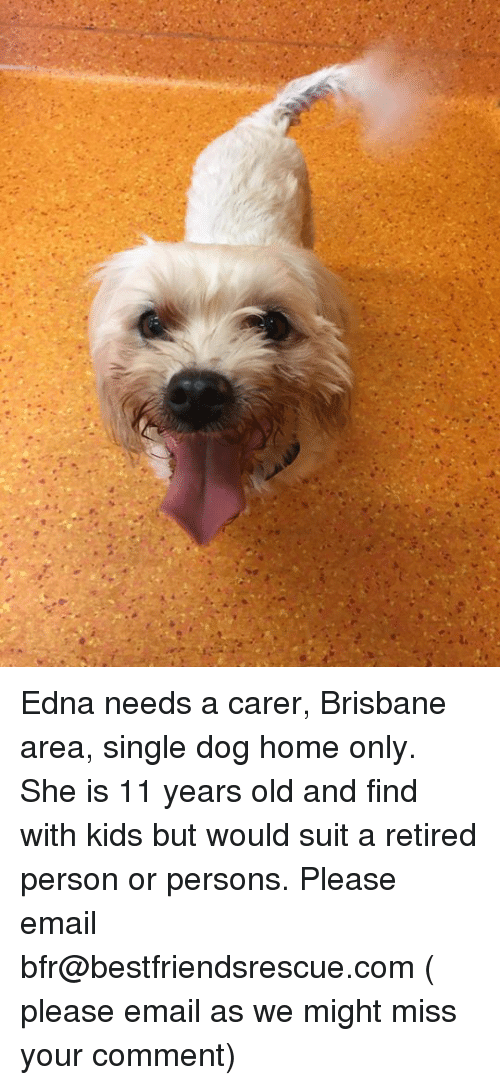Memes, Email, and Home: Edna needs a carer, Brisbane area, single dog home only. She is 11 years old and find with kids but would suit a retired person or persons. Please email bfr@bestfriendsrescue.com ( please email as we might miss your comment)