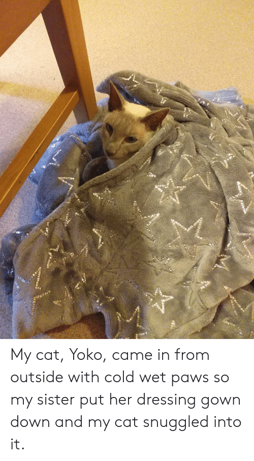 Eea S10u0to My Cat Yoko Came in From Outside With Cold Wet