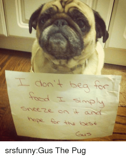 Tumblr, Blog, and Http: eeze on it and  hope for the aese srsfunny:Gus The Pug