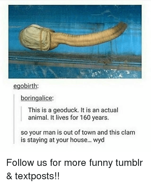 Funny, Memes, and Tumblr: egobirth  boringalice  This is a geoduck. It is an actual  animal. It lives for 160 years.  so your man is out of town and this clam  is staying at your house... wyd Follow us for more funny tumblr & textposts!!