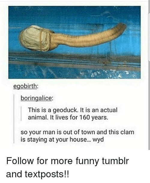 Funny, Memes, and Tumblr: egobirth:  boringalice  This is a geoduck. It is an actual  animal. It lives for 160 years.  so your man is out of town and this clam  is staying at your house... wyd Follow for more funny tumblr and textposts!!