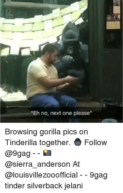 "9gag, Memes, and Tinder: ""Eh no, next one please"" Browsing gorilla pics on Tinderilla together. 🦍 Follow @9gag - - 📸 @sierra_anderson At @louisvillezooofficial - - 9gag tinder silverback jelani"