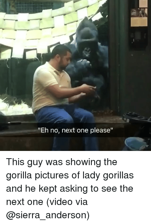 "Memes, Pictures, and Video: ""Eh no, next one please"" This guy was showing the gorilla pictures of lady gorillas and he kept asking to see the next one (video via @sierra_anderson)"