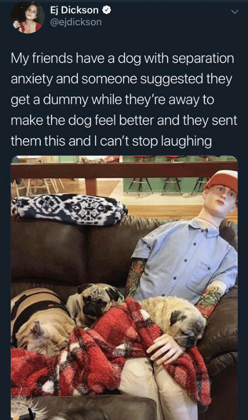 Friends, Anxiety, and Dog: Ej Dickson »  @ejdickson  My friends have a dog with separation  anxiety and someone suggested they  get a dummy while they're away to  make the dog feel better and they sent  them this and I can't stop laughing