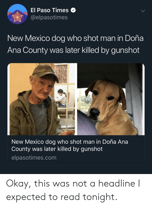 El Paso Times New Mexico Dog Who Shot Man in Doña Ana County
