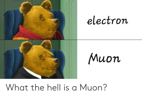 Hell, What, and What The: electron  Muon What the hell is a Muon?