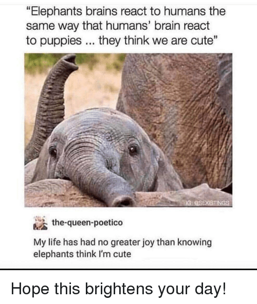 "Brains, Cute, and Life: ""Elephants brains react to humans the  same way that humans' brain react  to puppies... they think we are cute""  the-queen-poetico  My life has had no greater joy than knowing  elephants think I'm cute Hope this brightens your day!"