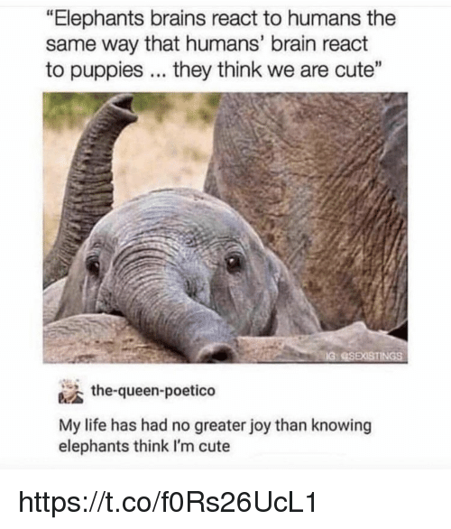 "Brains, Cute, and Life: ""Elephants brains react to humans the  same way that humans' brain react  to puppies. they think we are cute""  IG  the-queen-poetico  My life has had no greater joy than knowing  elephants think I'm cute https://t.co/f0Rs26UcL1"