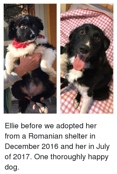 Home Market Barrel Room Trophy Room ◀ Share Related ▶ Happy Romanian her Dog one shelter july december thoroughly ellie And Happy Dog next collect meme → Embed it next → Happy and Happy Meme Meme Happy Romanian her Dog one shelter july december thoroughly ellie And Happy Dog From Adopted Happy Happy Romanian Romanian her her Dog Dog one one shelter shelter july july december december thoroughly thoroughly ellie ellie And And Happy Dog Happy Dog From From Adopted Adopted found ON 2017-08-01 21:31:54 BY me.me view more on me.me