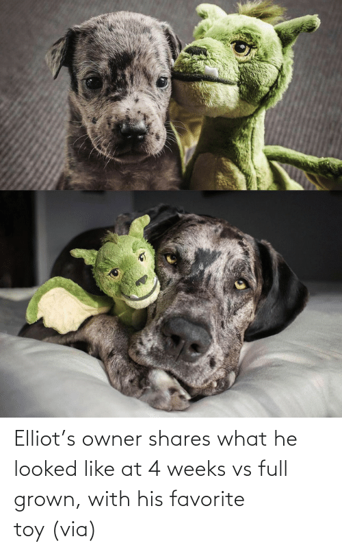 Aww, Reddit, and Target: Elliot's owner shares what he looked like at 4 weeks vs full grown, with his favorite toy(via)