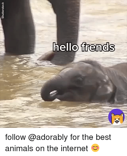 Animals, Internet, and Best: ello frenaS follow @adorably for the best animals on the internet 😊