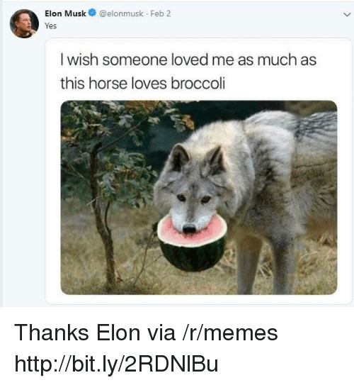 Memes, Horse, and Http: Elon Musk@elonmusk Feb 2  res  I wish someone loved me as much as  this horse loves broccoli Thanks Elon via /r/memes http://bit.ly/2RDNlBu