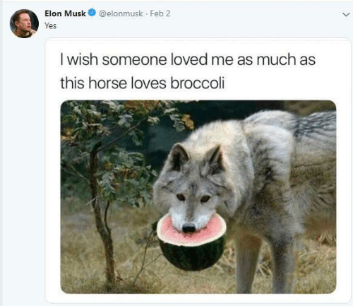 Horse, Elon Musk, and Broccoli: Elon Musk@elonmusk Feb 2  res  I wish someone loved me as much as  this horse loves broccoli