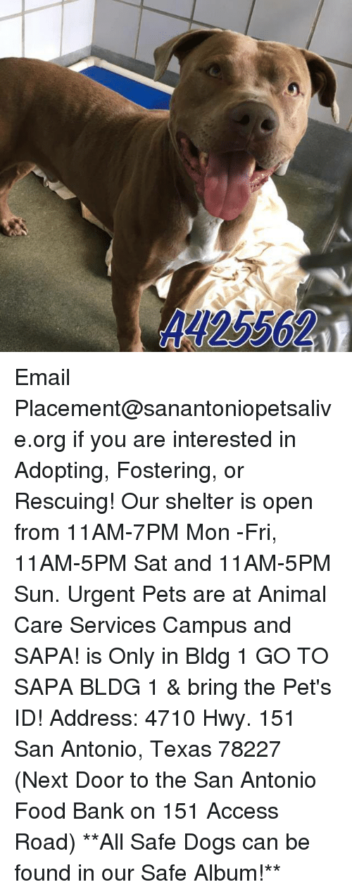 Memes, 🤖, and Sun: Email Placement@sanantoniopetsalive.org if you are interested in Adopting, Fostering, or Rescuing!  Our shelter is open from 11AM-7PM Mon -Fri, 11AM-5PM Sat and 11AM-5PM Sun.  Urgent Pets are at Animal Care Services Campus and SAPA! is Only in Bldg 1 GO TO SAPA BLDG 1 & bring the Pet's ID! Address: 4710 Hwy. 151 San Antonio, Texas 78227 (Next Door to the San Antonio Food Bank on 151 Access Road)  **All Safe Dogs can be found in our Safe Album!**