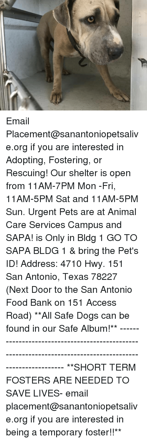 Dogs, Food, and Memes: Email Placement@sanantoniopetsalive.org if you are interested in Adopting, Fostering, or Rescuing!  Our shelter is open from 11AM-7PM Mon -Fri, 11AM-5PM Sat and 11AM-5PM Sun.  Urgent Pets are at Animal Care Services Campus and SAPA! is Only in Bldg 1 GO TO SAPA BLDG 1 & bring the Pet's ID! Address: 4710 Hwy. 151 San Antonio, Texas 78227 (Next Door to the San Antonio Food Bank on 151 Access Road)  **All Safe Dogs can be found in our Safe Album!** ---------------------------------------------------------------------------------------------------------- **SHORT TERM FOSTERS ARE NEEDED TO SAVE LIVES- email placement@sanantoniopetsalive.org if you are interested in being a temporary foster!!**