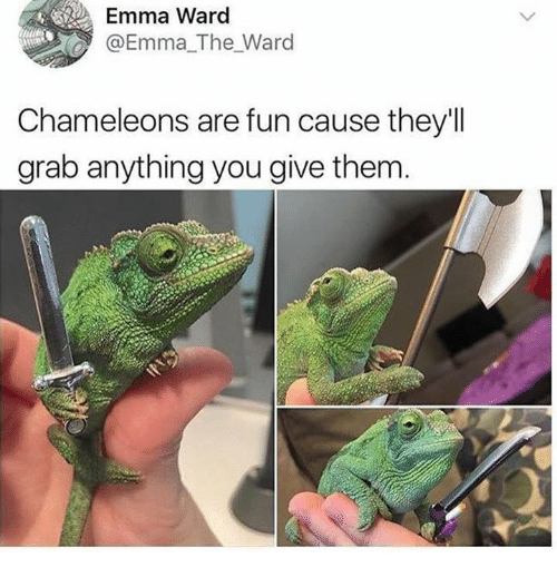 Humans of Tumblr, Fun, and Emma: Emma Ward  @Emma_The_Ward  Chameleons are fun cause they'll  grab anything you give them